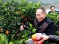 冰糖橙之乡--麻阳 (4)