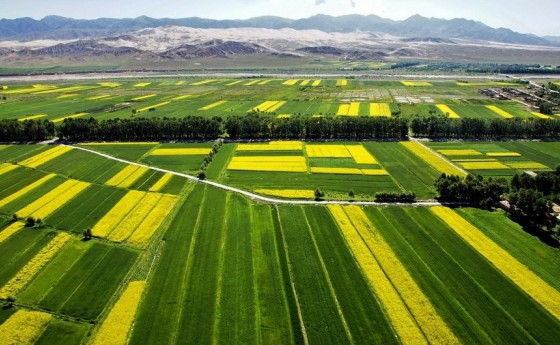 我国耕地质量水平总体稳定