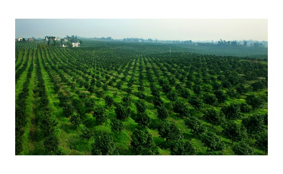 """汝南县常兴镇3000农家院转身变""""绿富美"""""""