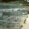 鸡笼、鸽子笼、兔子笼、狐狸笼、养殖笼、宠物笼、鸟笼、鸡鸽兔笼