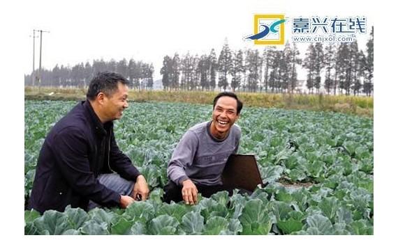 """专家:""""种田CEO""""让传统农业更有""""钱途"""""""