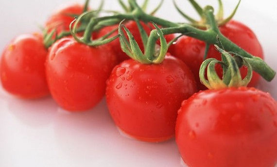 种植越夏番茄要注意两个问题