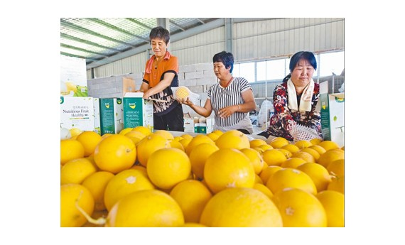 设施农业助脱贫