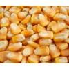 汉江畜禽养殖合作社大量收购玉米高粱黄豆荞麦等农副产品