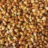 荞麦目前收购价格;汉江常年收购荞麦黄荞苦荞甜荞等欢迎电议