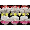 杞县大蒜,产地直供,质优价廉(河南杞县黄村大蒜贸易中心)