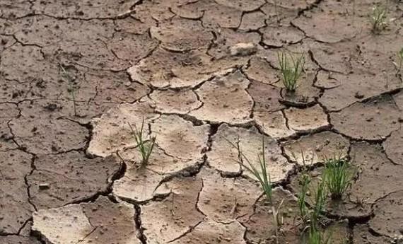 板、馋、贫、浅、酸、咸、脏、杂,土壤八大问题!